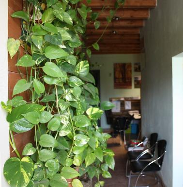 Le piante ornamentali presenti nell'ingresso impresa battaglioli luca